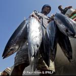 AgrifoodTech: la filiera del tonno si certifica con la Blockchain