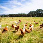 Dalla filiera del pollo a quella dell'ortofrutta: Carrefour punta sulla blockchain